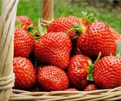 Health Benefits of Strawberry.html