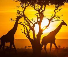 Beautiful Things About Kenya.html