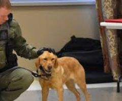 Meet Zoe the Police Dog Trending In Canada For Saving Two Teen Girls.html