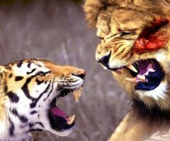 Interesting Facts About Big Cats .html